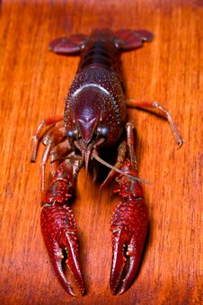 Free Crayfish Royalty Free Stock Photography - 5881457