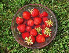 Dishful Of Strawberry Stock Photography
