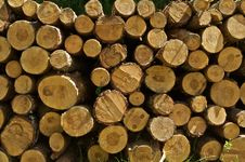 Stock Of Wood Royalty Free Stock Photo
