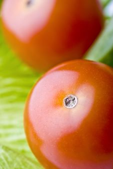 Tomato And Salad Royalty Free Stock Image