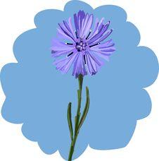 Free Cornflower Stock Image - 5883291