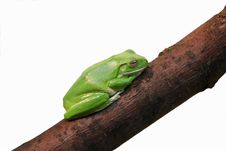 Free Little Green Frog On Branches Stock Image - 5883401