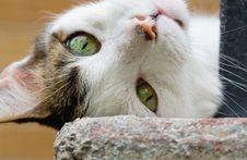 Free Playful Cat Stock Photos - 5883773