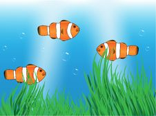 Free Clownfishes In The Sea Royalty Free Stock Images - 5883829
