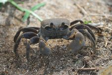 Free Crab Stock Images - 5885404