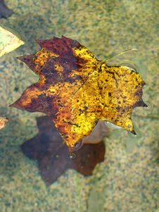 Floating Leaf Stock Photography