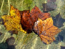 Three Floating Leaves Stock Photography