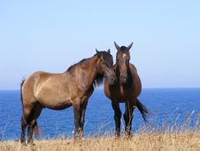 Free Two Brown Horses Royalty Free Stock Photo - 5885515