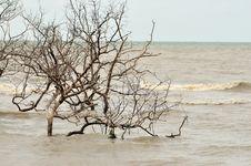 Free Flooded Stock Photo - 5885680