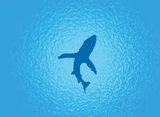 Free Shark Stock Photography - 5885802