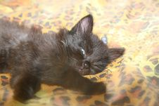 Free Feline Morning Royalty Free Stock Photography - 5886267