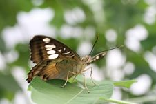 Free Perching On A Leaf Stock Images - 5886534