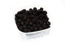 Free Wild Blackberry In A Plastik Container Stock Photos - 5886613