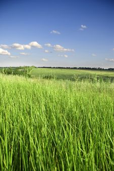 Free Sky And Grass Royalty Free Stock Photography - 5886917