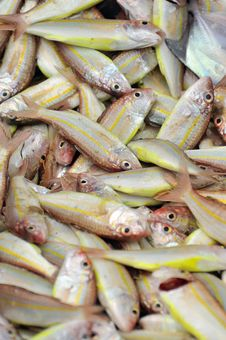 Heaps Of Fish Series 4 Royalty Free Stock Photography