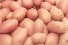 Free Potatoes. Royalty Free Stock Photography - 5887067