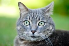 Free Cat Stock Photography - 5888062