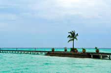 Free Maldives, Welcome To Paradise! Stock Photography - 5888122