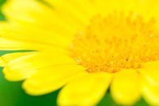 Free Yellow Macro Flower Royalty Free Stock Photo - 5888145