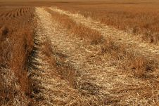 Free Cut Wheat Royalty Free Stock Photos - 5888608