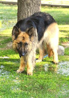 Free Dog Royalty Free Stock Image - 5889926