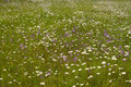 Free Green Grass At Field Stock Image - 5894861