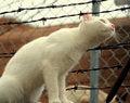 Free Curious Cat Royalty Free Stock Photos - 5896698