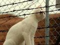 Free Curious Cat Stock Photo - 5896750