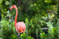 Free Flamingo Stock Image - 5897211