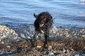 Free Wet Dog Shaking Stock Image - 5897921