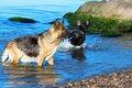 Free Wet Germany Sheep-dog Stock Image - 5898921