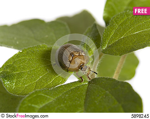 Free Bug On A Plant Royalty Free Stock Photo - 5898245