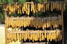Free Corn Stock Image - 5890001
