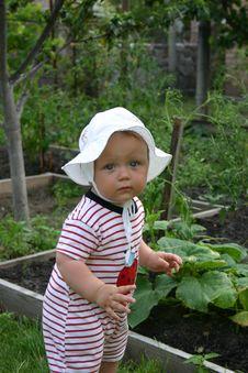 Free Market Gardener Royalty Free Stock Photography - 5890037