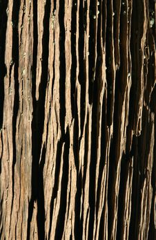 Free Wood Texture Stock Photography - 5891712