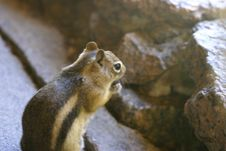 Free Hungry Squirrel Stock Photography - 5892172
