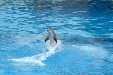 Free Dolphin Swimming Backwards Royalty Free Stock Photo - 5892435