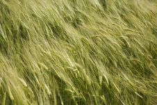 Free Green Field In Late Spring Stock Photo - 5894210