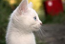Free Kitten Royalty Free Stock Photos - 5894688