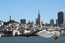 Free San Francisco Seagull Stock Images - 5894724