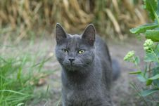 Free Grey Cat Stock Image - 5894831