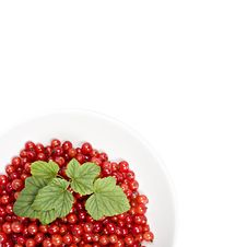 Free Red Berries In A Isolated Bowl Royalty Free Stock Photo - 5895085