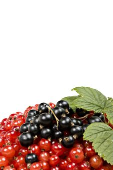 Free Isolted Berries Royalty Free Stock Photos - 5895118