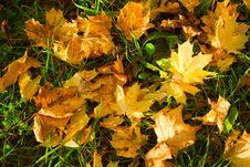 Free Foliage Stock Image - 5895291