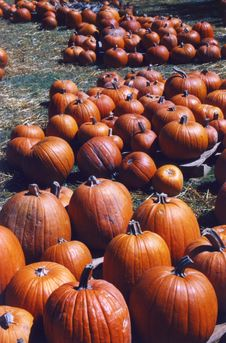Free Pumpkins Royalty Free Stock Images - 5896059