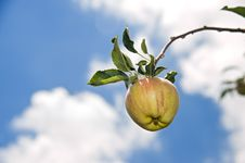 Free Red Apple On Branch Stock Photos - 5896143