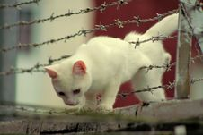 Cat Through Barbed Wire Royalty Free Stock Photo