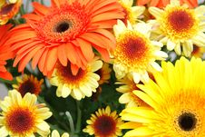Free Bouquet Of Flowers Royalty Free Stock Image - 5896916