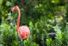 Free Flamingo Stock Image - 5897211