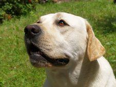 Free Dog Royalty Free Stock Photography - 5898037